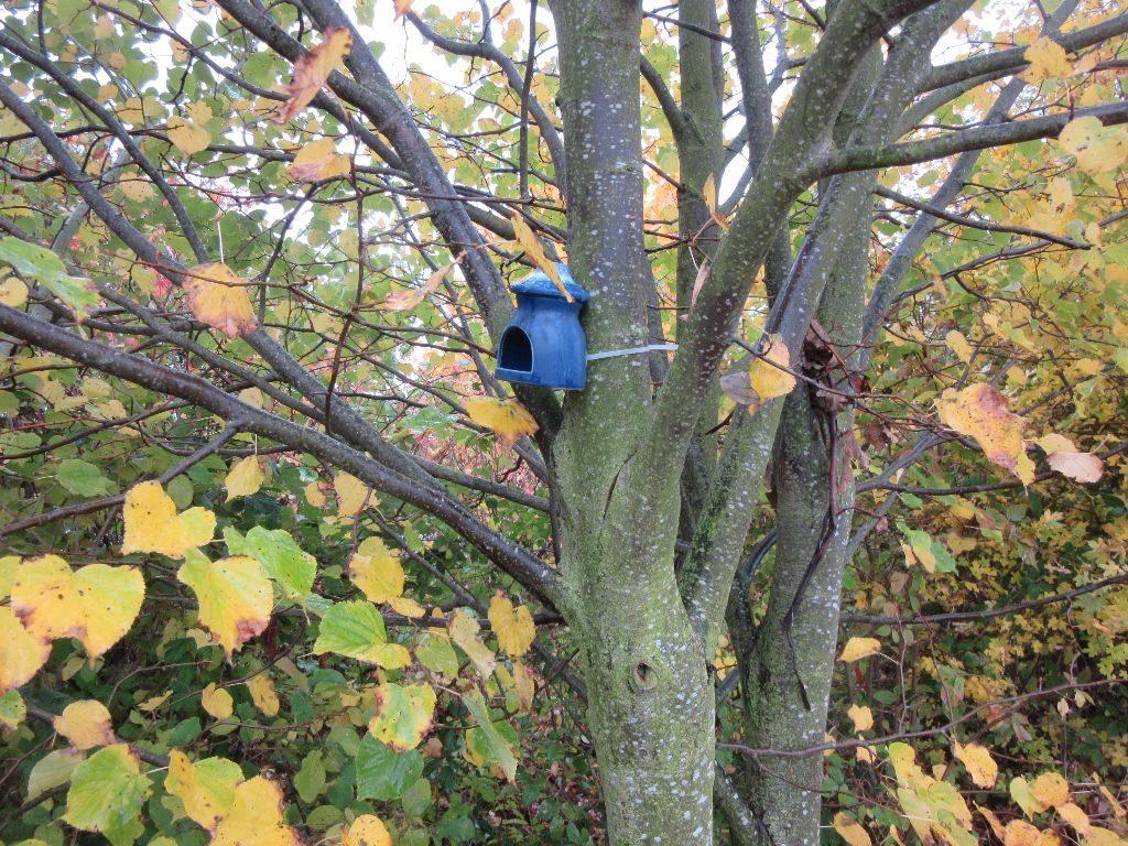 """Hier mal wieder ein kleines positives Beispiel, Befestigung am Baum ohne Schraube oder Nagel, die inneliegende Filmdose war durch das """"kleine blaue Ding"""" gut geschützt."""